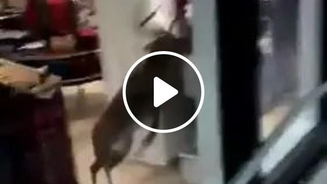 Deer Running In Fashion Clothing Store - Video & GIFs   deer, fashion clothing store, fashion men and women, shopping
