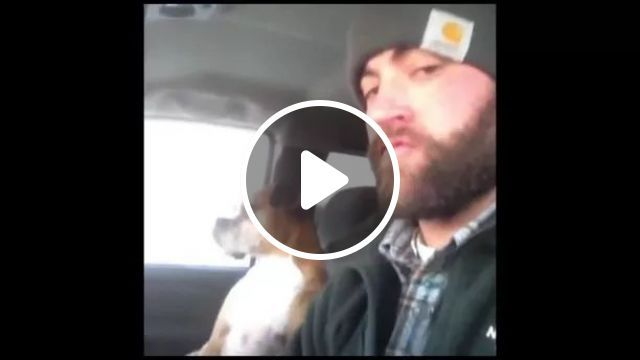 Cool Face Dog Traveling With A Man On The Car - Video & GIFs   dog, cool, American travel, man, male fashion, luxury car