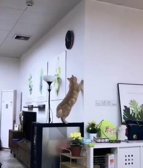 cat wants to touch clock in living room
