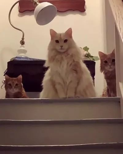 Cats inside new apartment - Video & GIFs | animals,cats,pets,new apartments,luxury apartments
