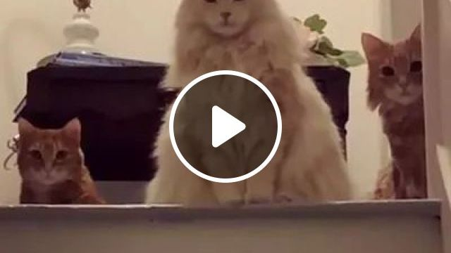 Cats Inside New Apartment - Video & GIFs   animals, cats, pets, new apartments, luxury apartments