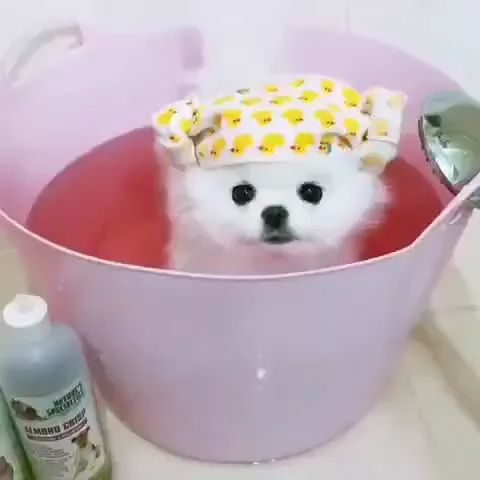 Adorable dog is taking care of fur in pet care center - Video & GIFs   dog,animals,pet,lovely,being groomed,pet care center