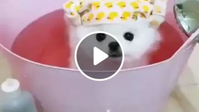 Adorable Dog Is Taking Care Of Fur In Pet Care Center - Video & GIFs | dog, animals, pet, lovely, being groomed, pet care center