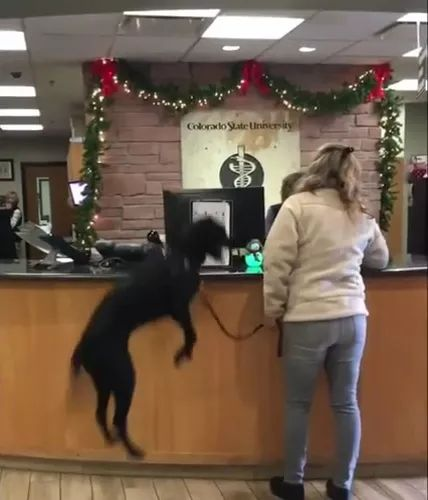Girl is booking a hotel for a travel trip with a dog