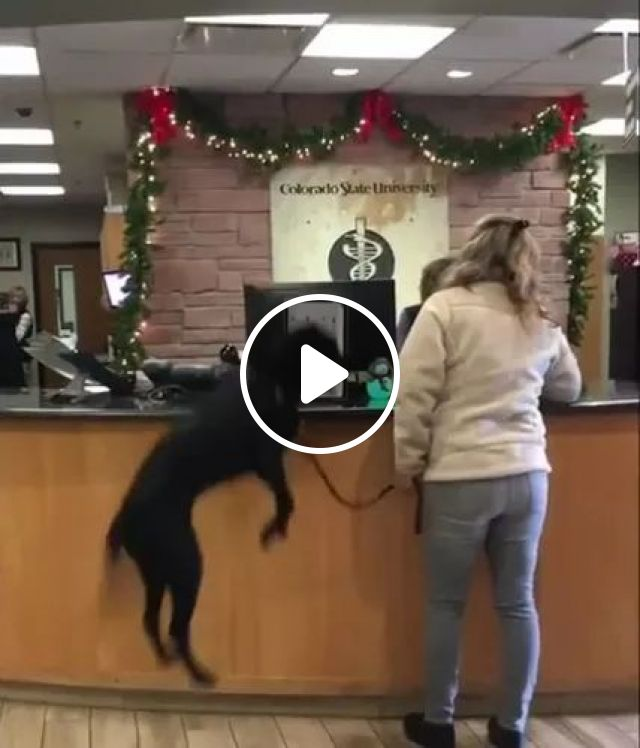Girl Is Booking A Hotel For A Travel Trip With A Dog - Video & GIFs | girls, women fashion, hotel booking service, luxury hotels, for trips, Switzerland travel, dogs