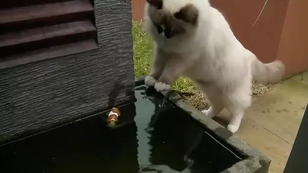 Cat helps out his fishy friend