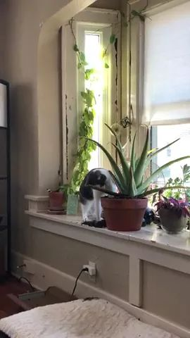 cat is looking for something in flowerpot of living room