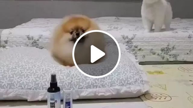Guess Who Comes Back In Room - Video & GIFs | room, luxurious furniture, animals, pets, pet care