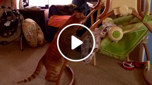 Thoughtful Cat Takes Her To Bed In Bedroom - Video & GIFs   Smart cat, bedroom furniture, cute baby, baby clothes, baby care