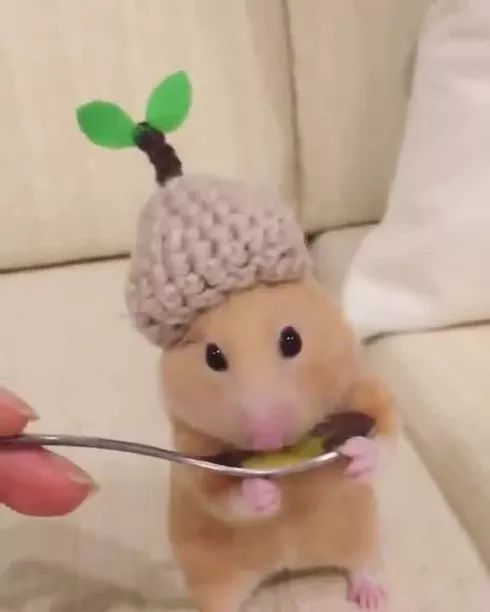 Very delicious honey - Video & GIFs | Friendly animals, pet care, cute animals, smart mice