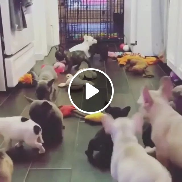Puppies playing in luxury apartments, animals, pets, puppies, luxury houses, apartments, luxurious furniture