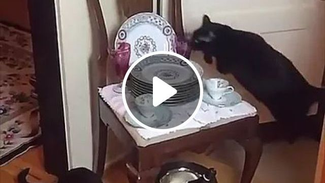Cat Scared Of Particular Spot On Kitchen Floor - Video & GIFs   cats, animals, pets, kitchens, kitchen tools, kitchen furniture