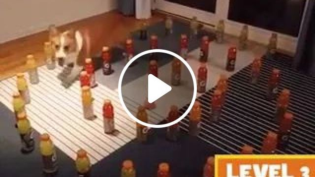 Smart Dog Overcomes All Obstacles In Apartment - Video & GIFs | animals, pets, dog breeds, dogs, intelligence, obstacles, luxury apartments