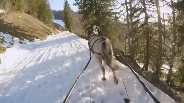 Skiing and horses