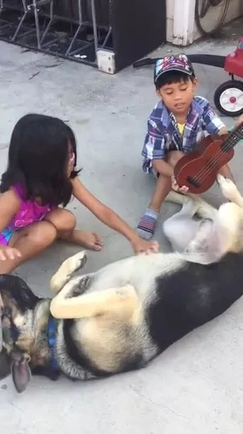 Talented Dog can play guitar by foot