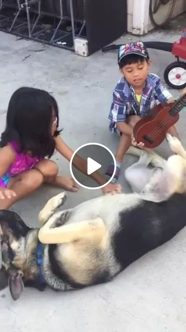 Talented Dog can play guitar by foot, dog, talent, can, play, guitar, foot, toy, friendly, kid