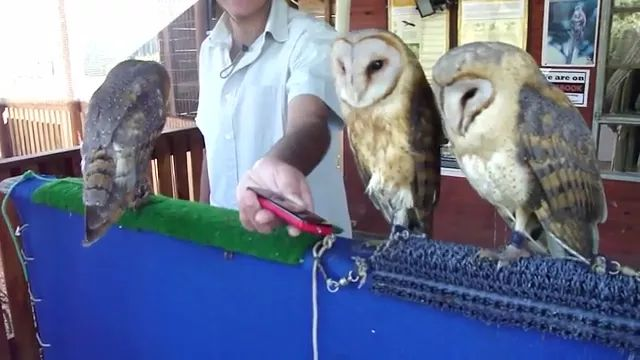 owl loves music from smartphone