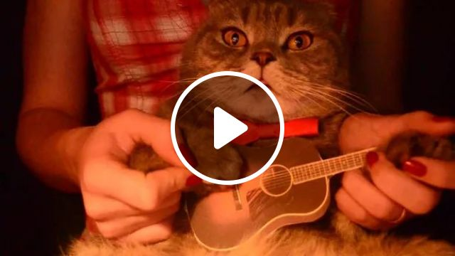 cat and girl playing guitar together
