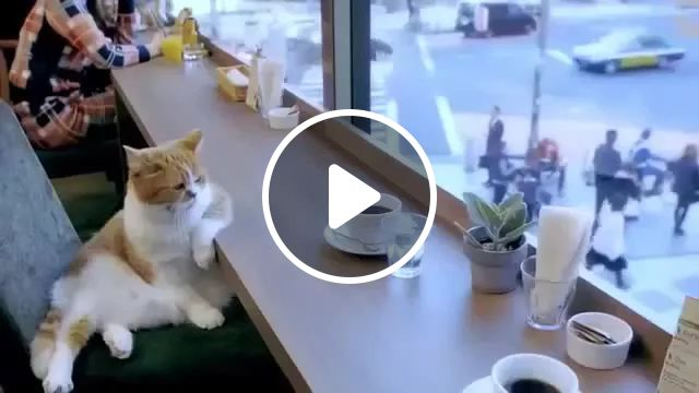 Very nice restaurants and cats are served as humans