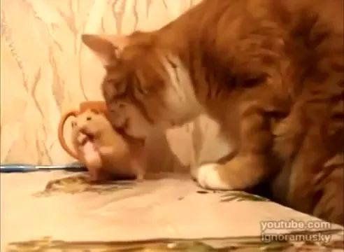 Mouse and cat in kitchen