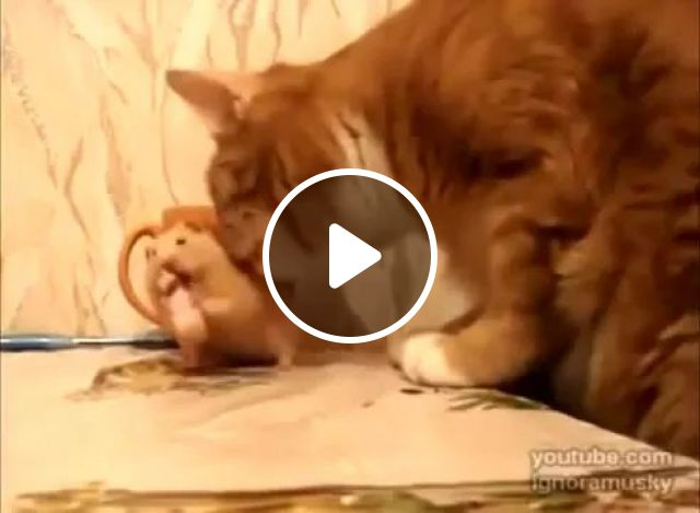 Mouse and cat in kitchen, Mouse, cats, animals, pets, friendly, kitchen, dining table, furniture