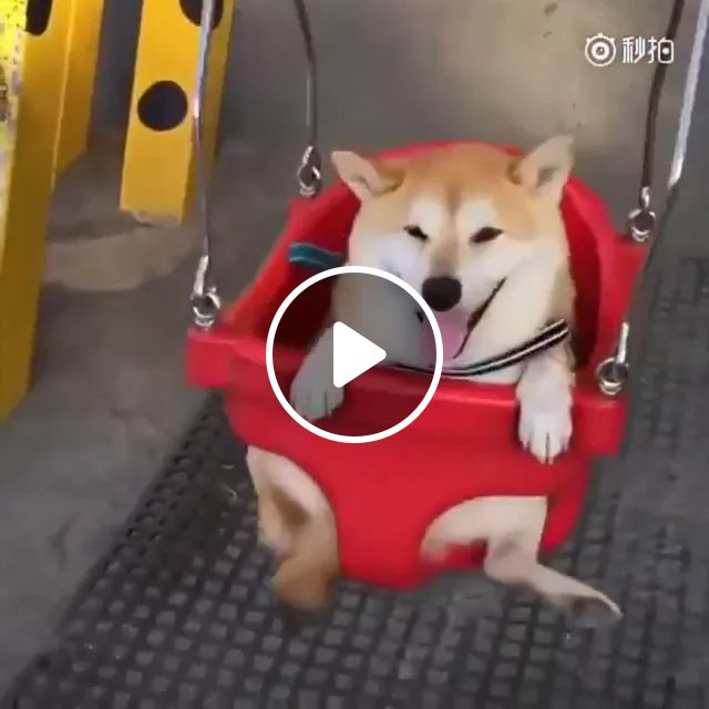 dog is happy to play swing