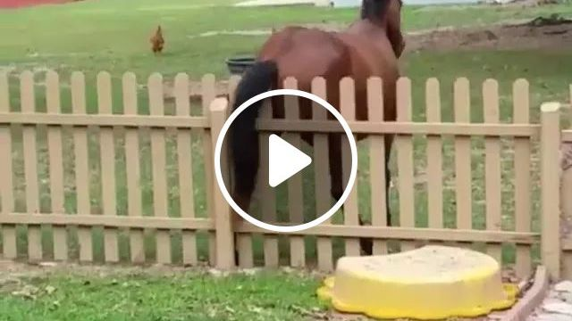 Horse and fence, Cute horses, wooden fences, horse racing, funny animals