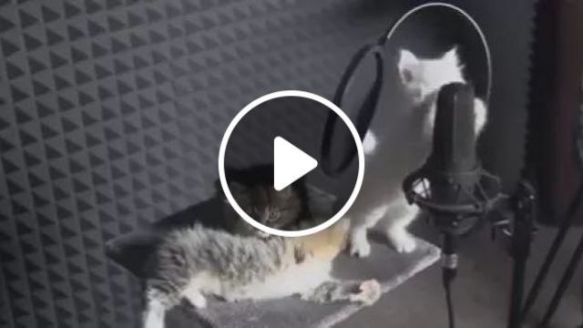 Cat Music Videomix, Cute cats, music equipment, funny animals