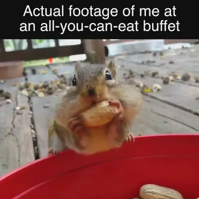 Actual footage of me at an all you can eat butfet