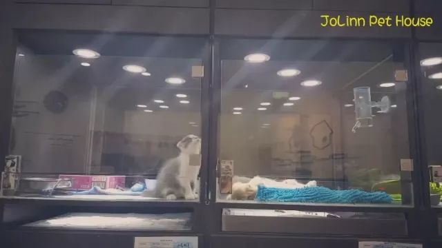 Smart cat inside pet care center