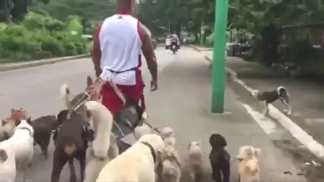 Man and dogs on American street