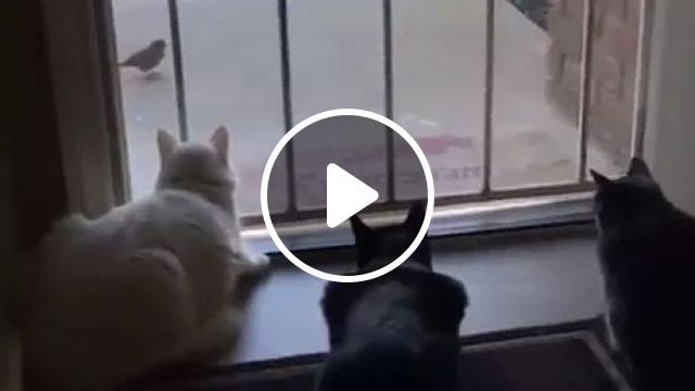haha cats are watching bird, startled when dog approaches, Cute cats, funny dogs, dog breeds, pets