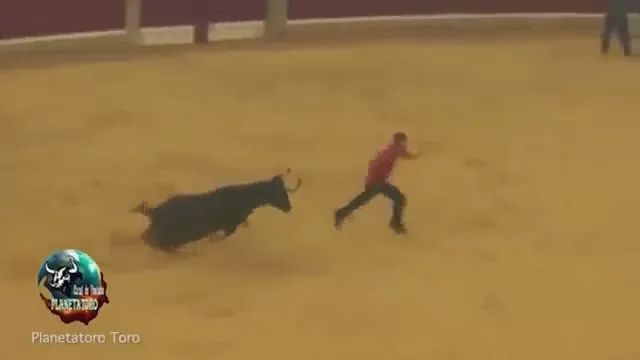 Man trying to run fast to avoid crawling in spain - Video & GIFs | Poor man, avoid cow, spanish cow festival