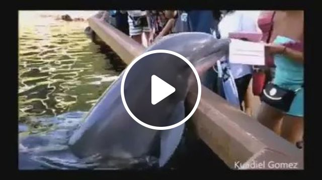 Dolphin robs tablet of tourists