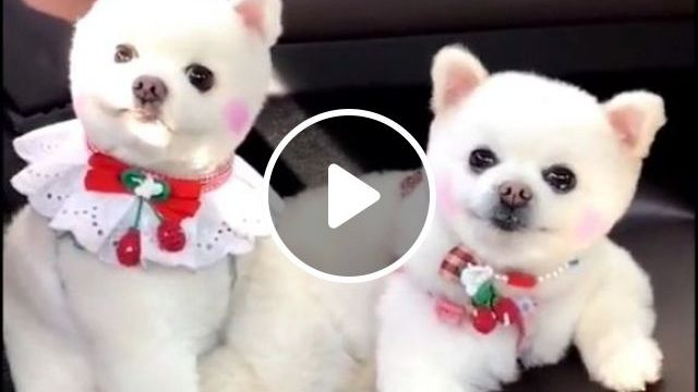 Car Travel With Small Dog - Video & GIFs | Pets and Animals, Dogs, Transporting Dogs
