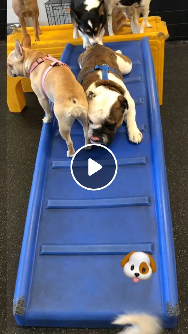 Keeping Social Skills In Older Dogs - Video & GIFs | Pets and Animals, Dogs, Senior Dog Care