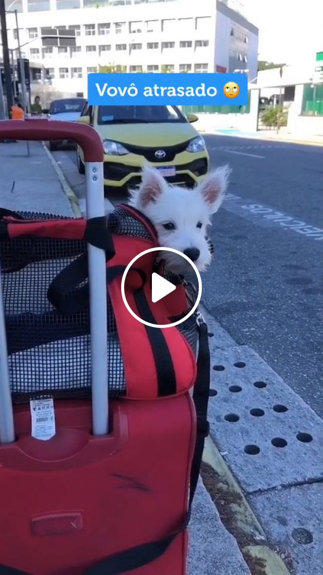 Steps For Flying Internationally With A Dog - Video & GIFs | Pets and Animals, Dogs, Transporting Dogs