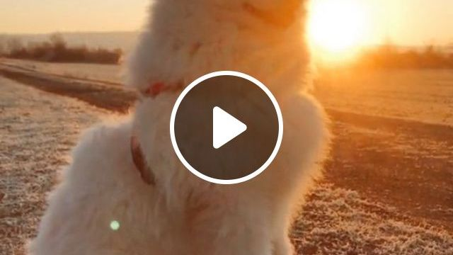 Travel Safely With Your Dog By Car, Airplane - Video & GIFs | Pets and Animals, Dogs, Transporting Dogs