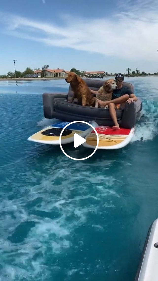 How To Ship A Dog Safely - Video & GIFs   Pets and Animals, Dogs, Transporting Dogs