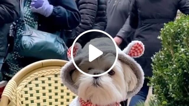 How To Keep Your Older Dog Warm In The Cold - Video & GIFs   Pets and Animals, Dogs, Senior Dog Care