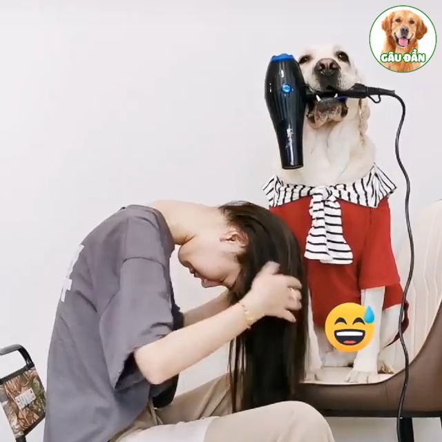 How to blow hair - Video & GIFs   hair,dryer,dog