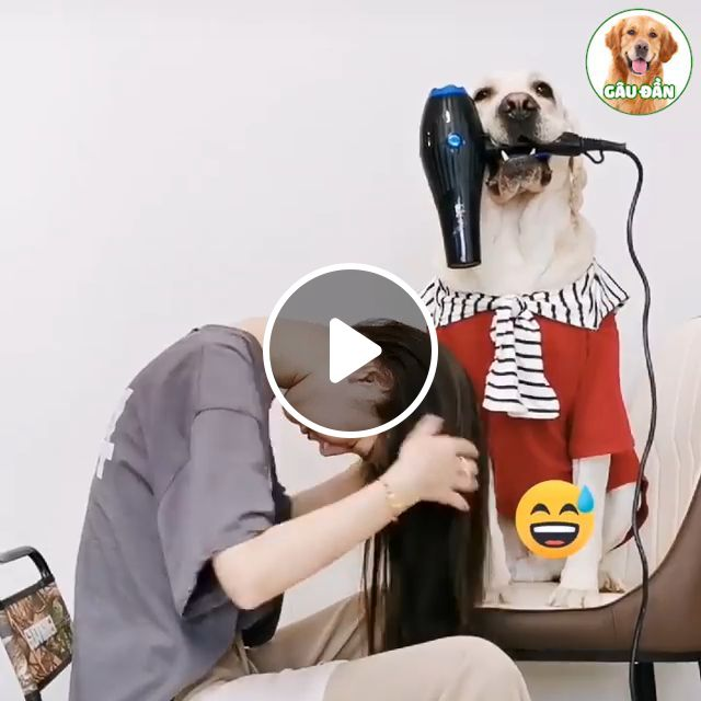 How To Blow Hair - Video & GIFs | hair, dryer, dog
