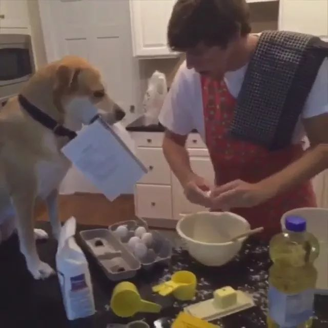 In kitchen, smart dogs hold recipes for men