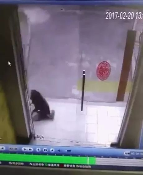 dog broke glass door of health care store