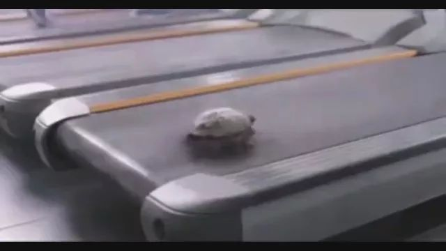 Fast or Slow, turtle, run, fast, treadmill