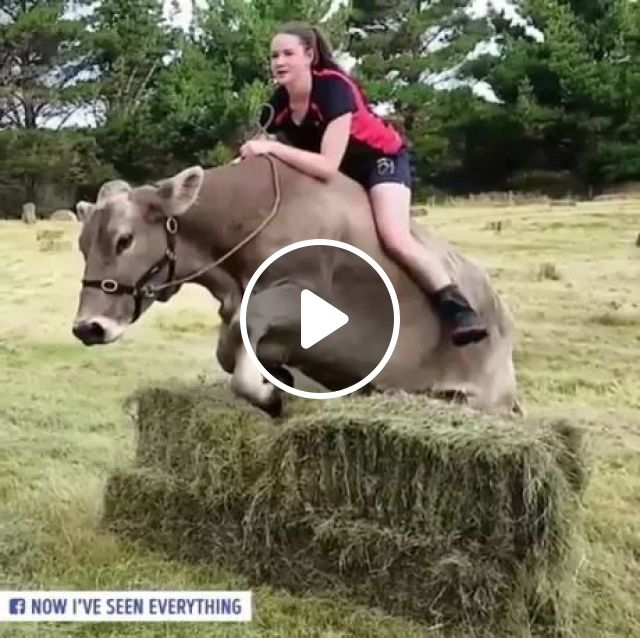 Brave girl riding a cow in Australia, Brave girls, riding cows, Australian travel, crawl