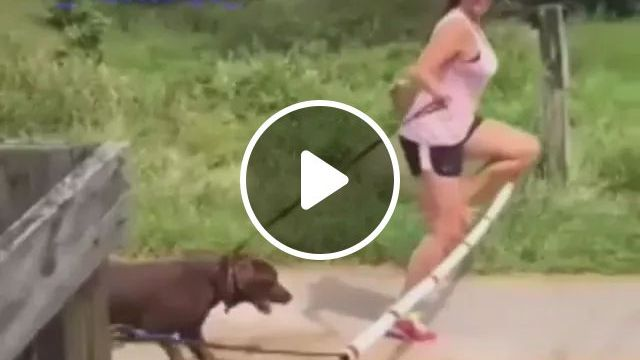 Girl and dog jump over obstacles, girls, sunglasses, sports clothes, sports shoes, dog leash, dog, adorable, jumping, crossing, obstacles, animals, pets