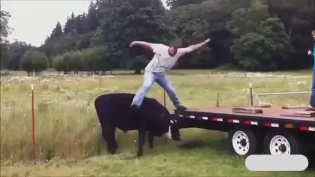 on the field, a man jumped from top of truck onto back of a cow
