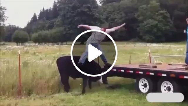 on the field, a man jumped from top of truck onto back of a cow, Funny man, male fashion clothes, cow riding, cow farm