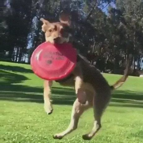 talented dog jumped up and held plastic plate